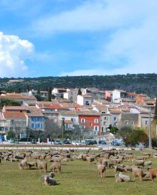 Happyssimmo - Saint-Anastasie sur Issole - Agence Immobilière - Vente Villa avec Jardin 01 83 - 83136
